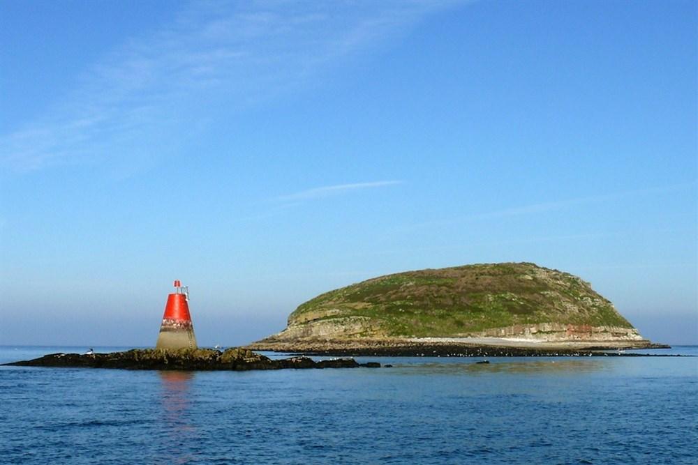 Hasil gambar untuk Puffin Island